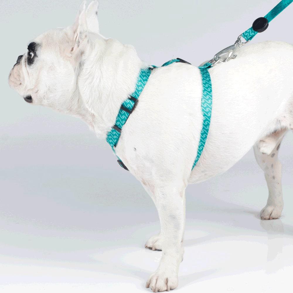 Peitoral H com Guia Pet Choice Ondas Verde