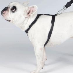 Peitoral H com Guia Pet Choice Preta